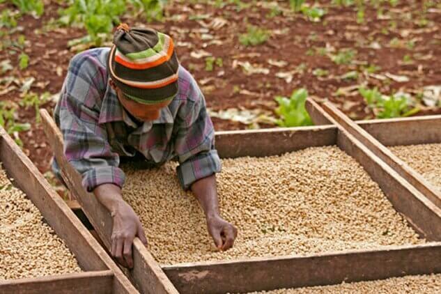 Torino Vintage Café favorise les petits producteurs de café, Guatemala, Mexique, Colombie, Ethiopie, exploitations familiales et café bio torréfié à l'ancienne